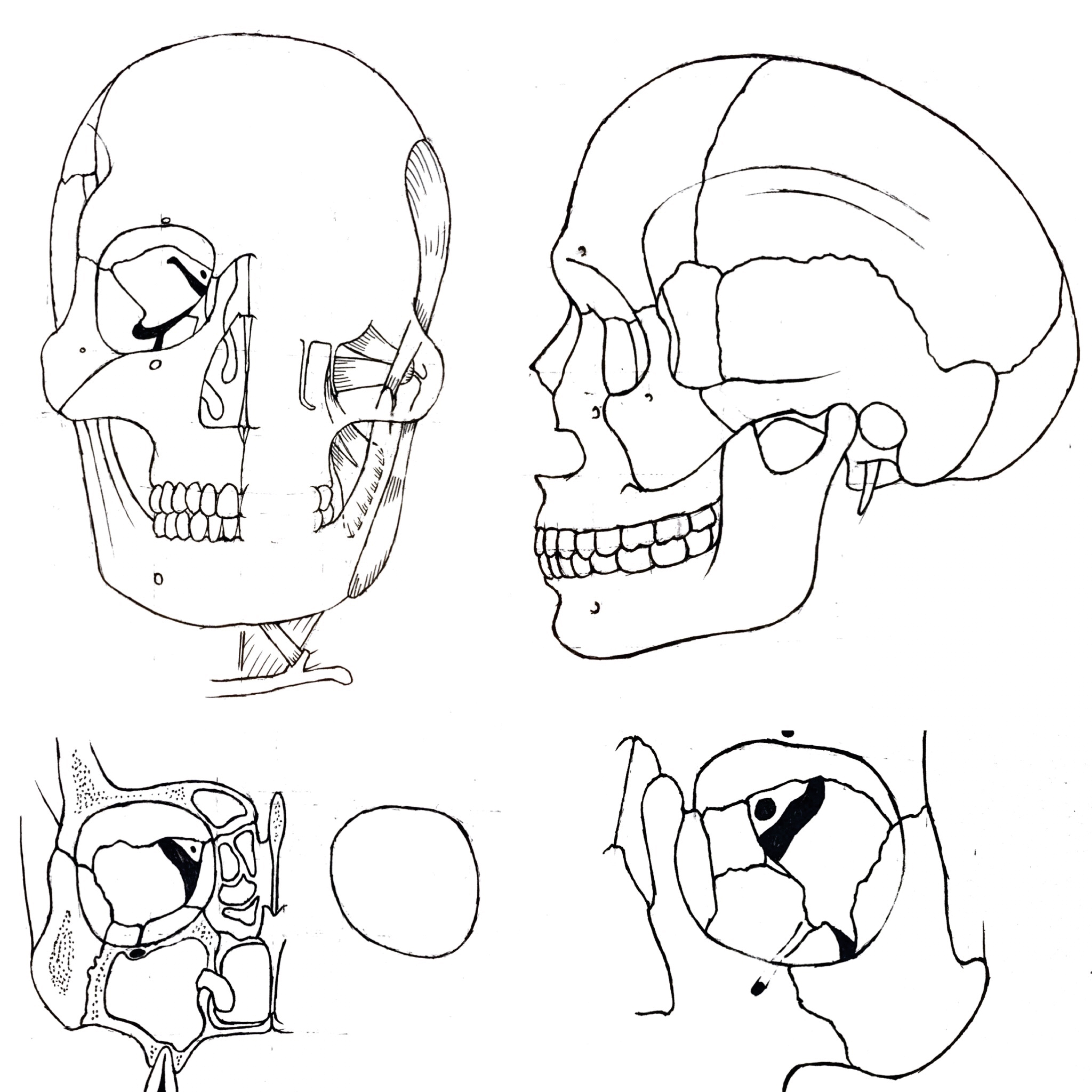 Teaching Students Head And Neck Anatomy Through The Art Of Drawing