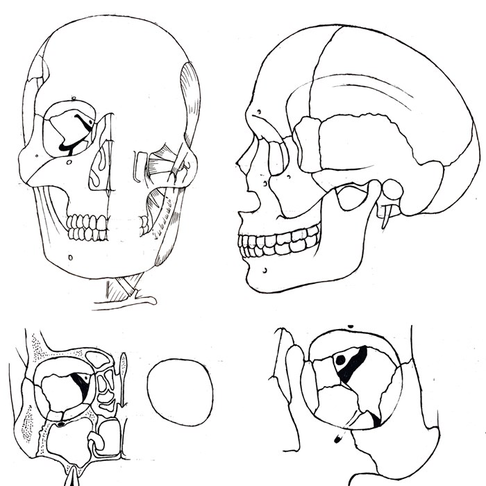 Teaching students head and neck anatomy through the art of drawing ...